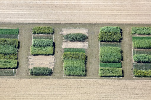 Aerial photograph of a seed field where something has already been harvested - Klaus Leidorf Aerial Photography