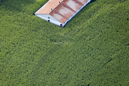 Aerial photograph of a pigsty in a maize field - Klaus Leidorf Aerial Photography