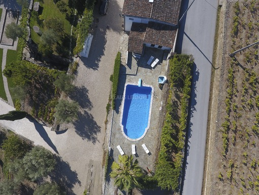 Aerial view of a swimming pool between palm trees, olive trees and vines - Klaus Leidorf Aerial Photography