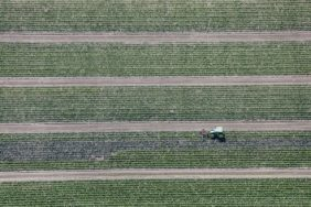 Aerial view of a tractor driving straight through a cabbage field and loosening the soil - Klaus Leidorf Aerial Photography