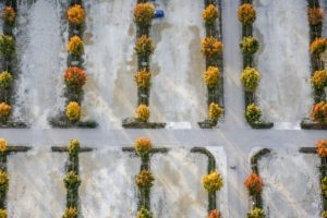 Aerial view of a blue car on a parking lot with autumnally colored trees - Klaus Leidorf Aerial Photography