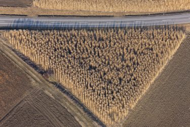 Aerial view of a triangular pampas grass field - Klaus Leidorf Aerial Photography
