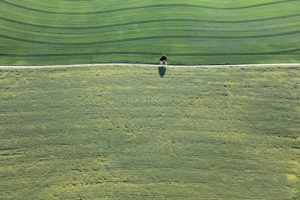 Aerial view of a lonely tree on a field path - Klaus Leidorf Aerial Photography