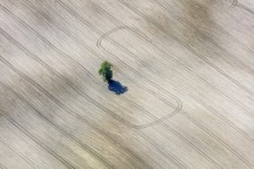 Aerial view of a lonely tree in a wide field, surrounded by tractor tracks - Klaus Leidorf Aerial Photography