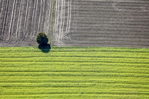 Aerial view of a lonely tree in the corner of the field - Klaus Leidorf Aerial Photography