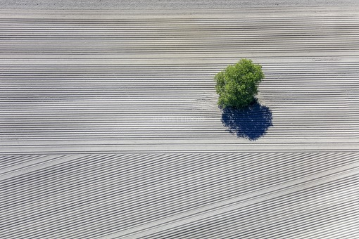 Aerial view of a lonely tree in arable land - Klaus Leidorf Aerial Photography