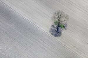Aerial view of an icy tree in arable land - Klaus Leidorf Aerial Photography