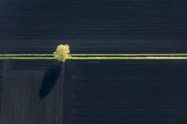 Aerial view of a spring green tree at the field ditch in black earth - Klaus Leidorf Aerial Photography