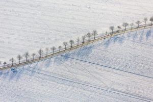 Aerial view of a shiny golden field path with row of trees - Klaus Leidorf Aerial Photography