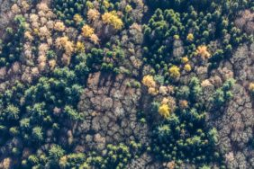 Aerial view of an autumnal mixed forest - Klaus Leidorf Aerial Photography