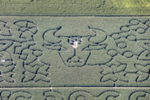 Aerial view of an artistic corn labyrinth near Atting-Rinkam - Klaus Leidorf Aerial Photography