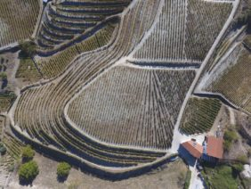 Aerial view of a modern vineyard in the Douro Valley in Portugal - Klaus Leidorf Aerial Photography