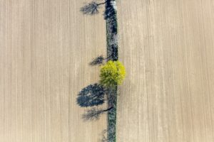 Aerial view of a narrow green strip with messengers of spring between two fields - Klaus Leidorf Aerial Photography