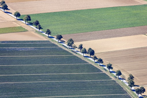 Aerial view of an avenue in arable land - Klaus Leidorf Aerial Photography