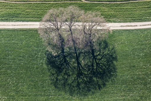 Aerial view of a group of trees - Klaus Leidorf Aerial Photography