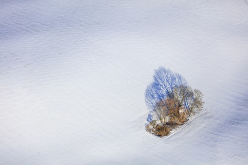 Aerial view of a tree island in a snowy field - Klaus Leidorf Aerial Photography