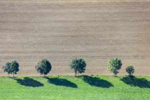 Aerial view of a row of trees at the edge of the field - Klaus Leidorf Aerial Photography
