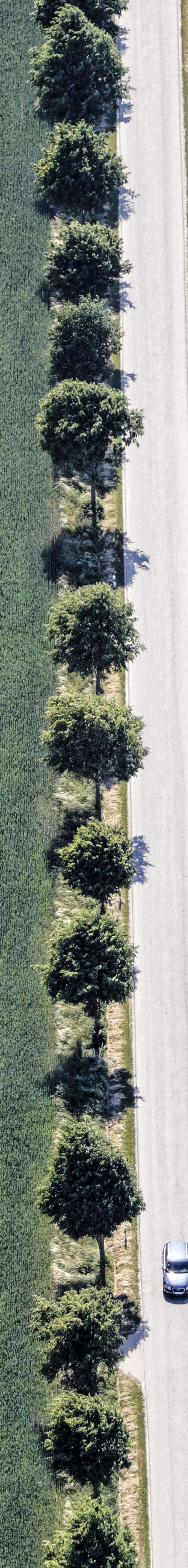 Aerial view of a row of trees at the roadside between wheat fields - Klaus Leidorf Aerial Photography