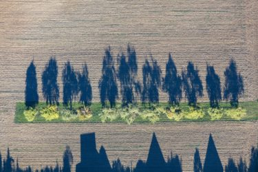Aerial view of a row of trees in a field at the edge of the village with shadows - Klaus Leidorf Aerial Photography