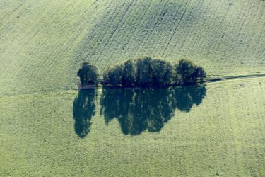 Aerial view of a row of trees in arable land in the evening light - Klaus Leidorf Aerial Photography