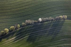 Aerial view of a row of trees in the farmland in the evening light - Klaus Leidorf Aerial Photography
