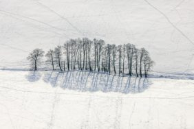 Aerial view of a row of trees with shadow on the snow - Klaus Leidorf Aerial Photography