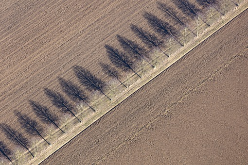 Aerial view of a row of trees with cast shadows along a field path - Klaus Leidorf Aerial Photography