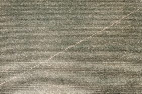 Aerial photograph of a diagonal line in a young maize field - Klaus Leidorf Aerial Photography
