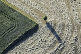 Aerial view of a field top with tree - Klaus Leidorf Aerial Photography