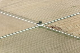 Aerial view of a field path crossing with a tree - Klaus Leidorf Aerial Photography