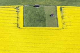 Aerial view of a peninsula with sheep in a rape field - Klaus Leidorf Aerial Photography