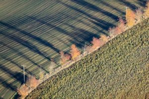 Aerial view of a row of autumn trees at the edge of a field - Klaus Leidorf Aerial Photography