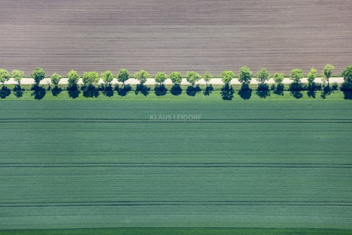 Aerial view of a row of trees at the edge of a field path in the Nördlinger Ries - Klaus Leidorf Aerial Photography