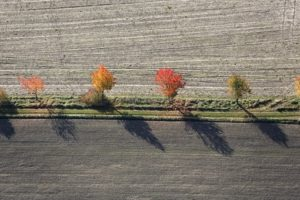 Aerial view of a row of cherry trees in autumn - Klaus Leidorf Aerial Photography