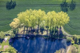 Aerial view of a row of spring green trees at the pond bank - Klaus Leidorf Aerial Photography