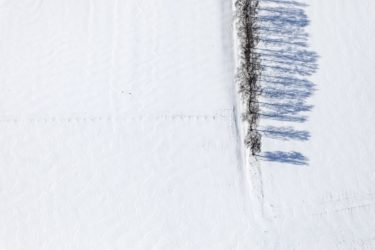 Aerial view of a row of shade-casting birches in the snow - Klaus Leidorf Aerial Photography