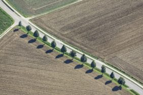 Aerial view of a row of 12 lime trees along the road to Mirskofen - Klaus Leidorf Aerial Photography