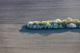 Aerial view of a flowering hedge in a field landscape - Klaus Leidorf Aerial Photography