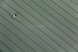 Aerial view of a lonely field chapel in a cornfield - Klaus Leidorf Aerial Photography
