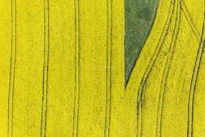 Aerial view of a green island in a flowering rape field - Klaus Leidorf Aerial Photography
