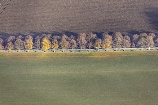 Aerial view of an autumn avenue with tractor - Klaus Leidorf Aerial Photography