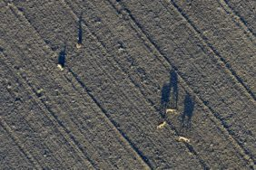 Aerial view of a small group of deer in an open field landscape - Klaus Leidorf Aerial Photography