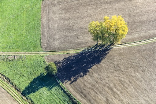 Aerial view of a group of trees in autumn - Klaus Leidorf Aerial Photography