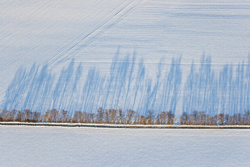 Aerial view of a row of shady trees on a snow-covered field - Klaus Leidorf Aerial Photography