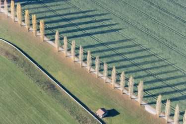 Aerial view of a row of poplars casting shadows - Klaus Leidorf Aerial Photography