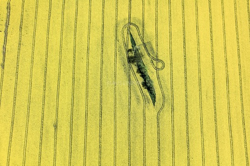 Aerial view of a narrow island in a flowering rape field - Klaus Leidorf Aerial Photography
