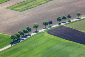 Aerial view of a row of trees along the road - Klaus Leidorf Aerial Photography