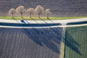 Aerial view of five trees at the roadside - Klaus Leidorf Aerial Photography