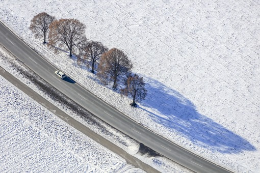 Aerial view of five deciduous trees at the roadside - Klaus Leidorf Aerial Photography