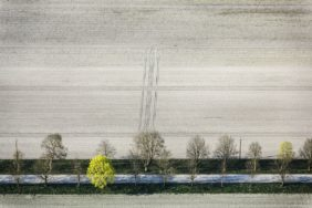 Aerial view of fresh green in the avenue - Klaus Leidorf Aerial Photography